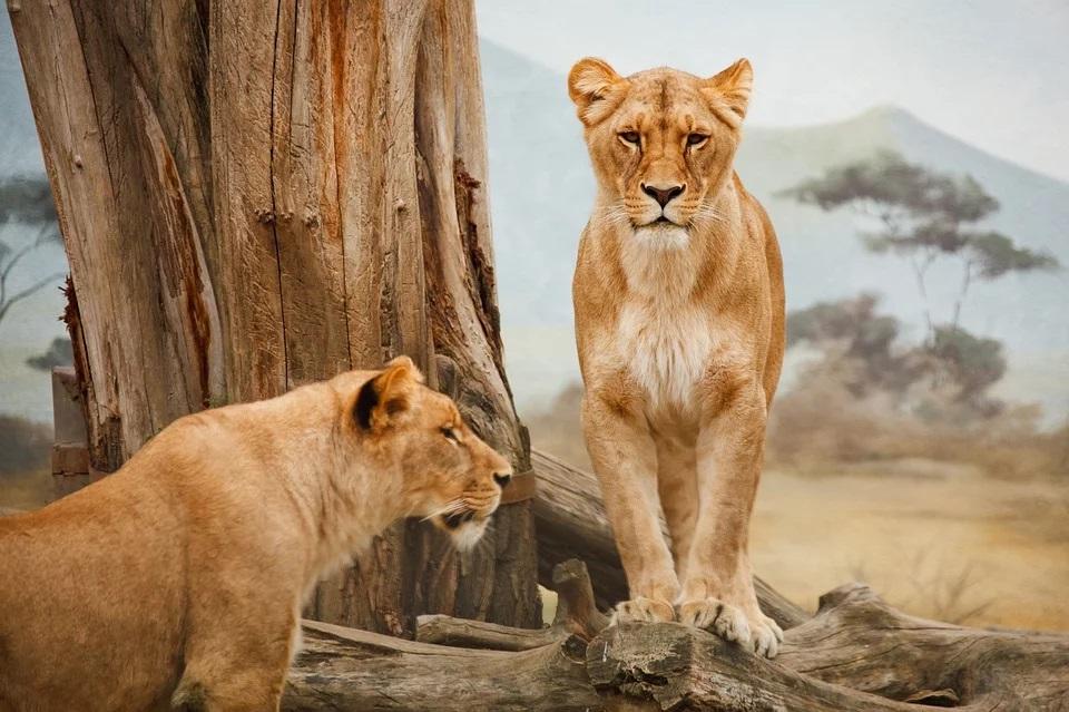 Frauen_Löwen